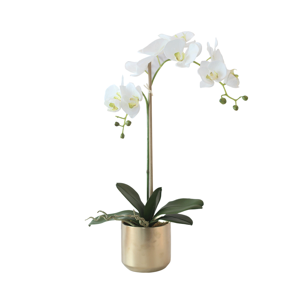 Double Phalaenopsis Orchids In Gold Ceramic Vase Medablooms