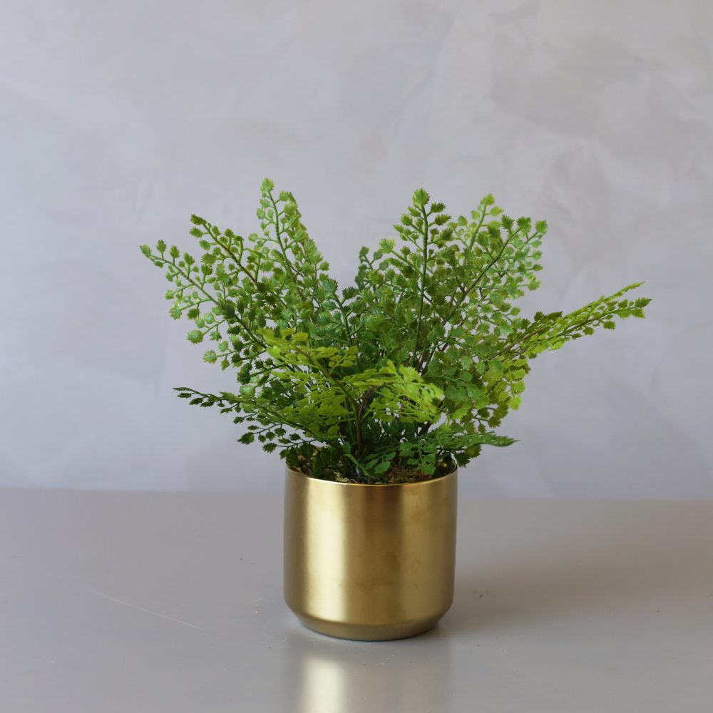 Artificial Adiantum Fern In Ceramic Pot Medablooms