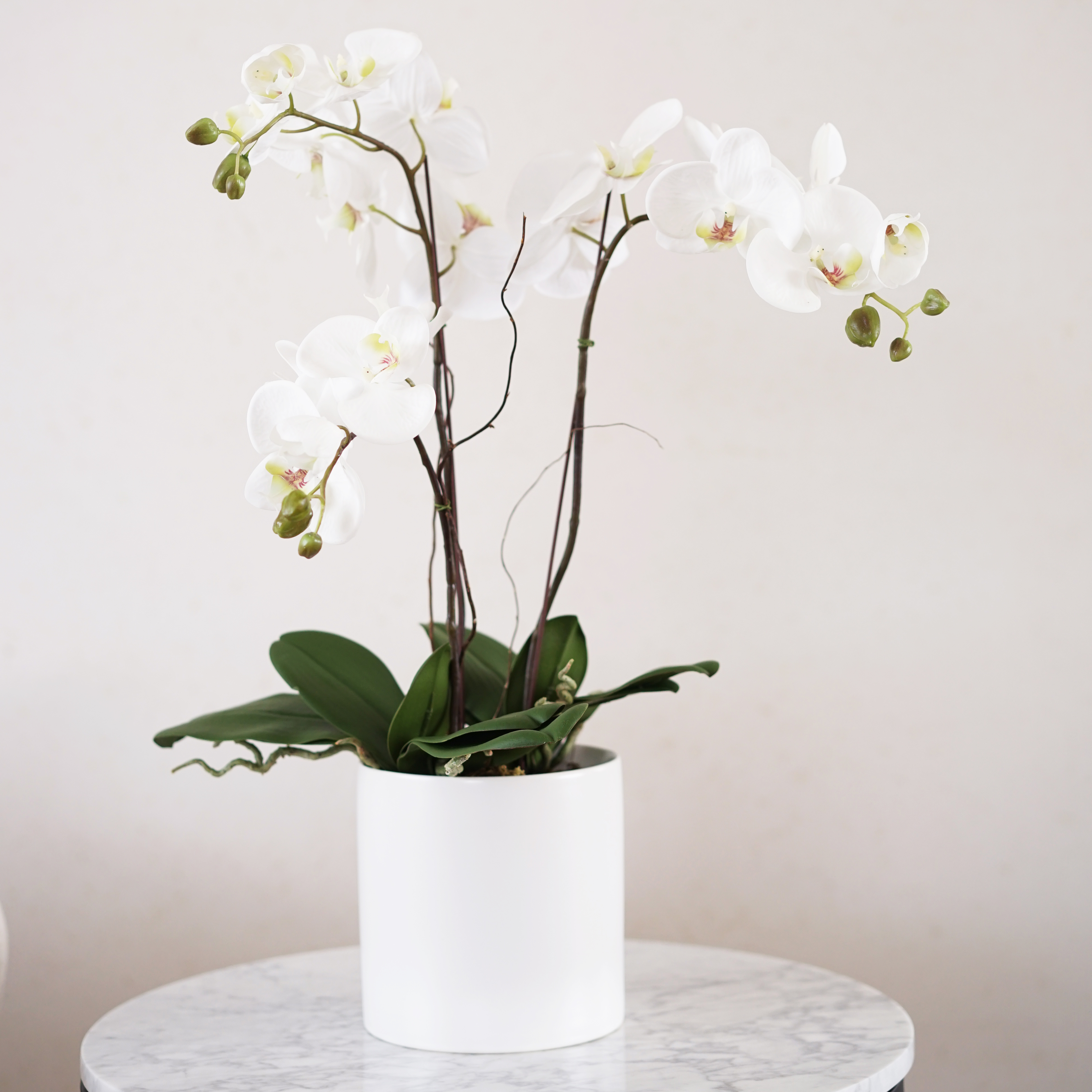 Faux Triple Phalaenopsis Orchid In White Vase Medablooms